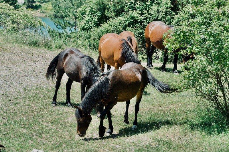 I cavalli selvaggi - Lago di Giacopiane